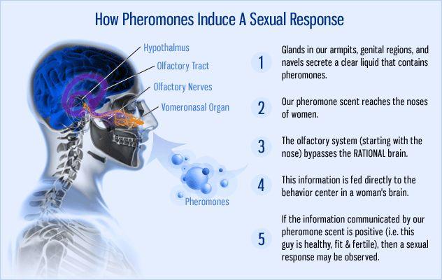 How pheromones induce a sexual response